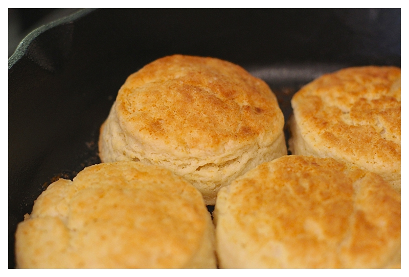 HOT !! Butter Milk Biscuits